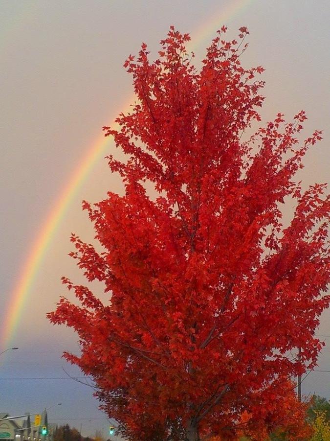 Rainbow and Fire