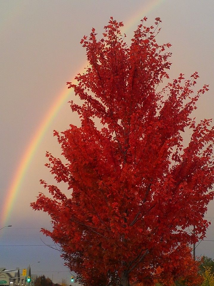 rainbow and fire tree