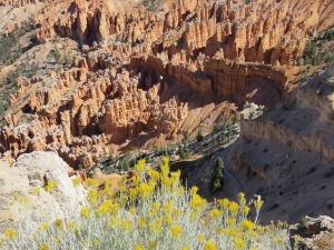 flowers in canyon