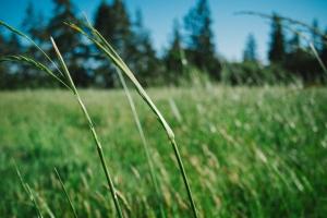 nature-sunny-field-summer