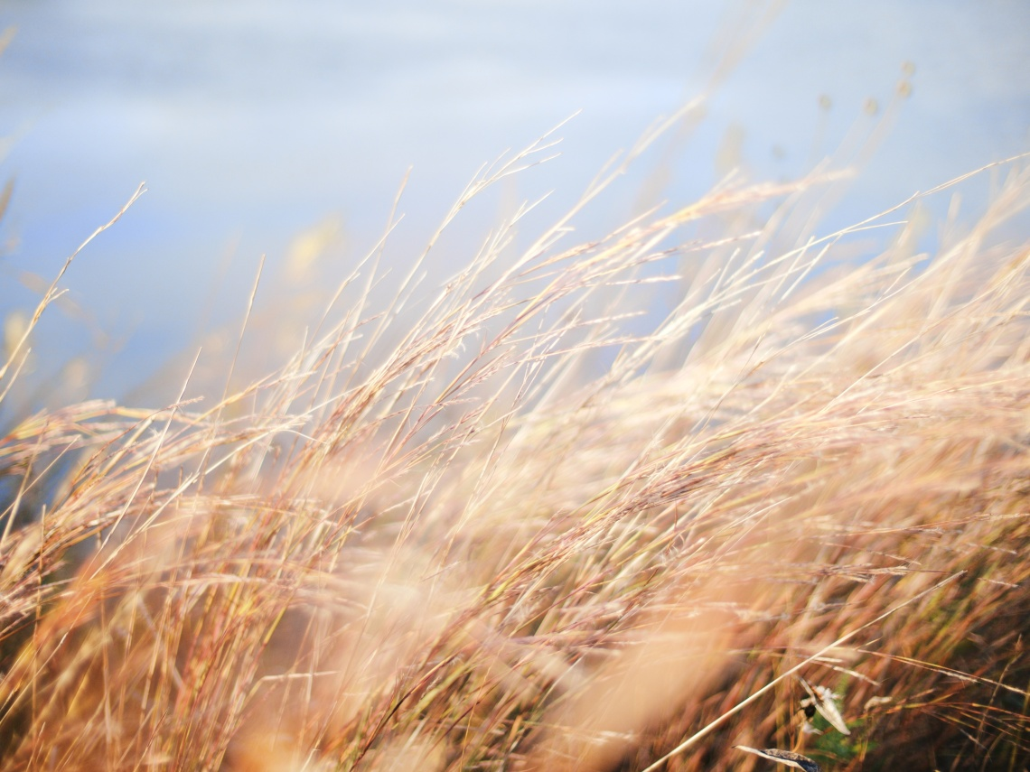 https://www.pexels.com/photo/brown-leaf-grasses-25800/