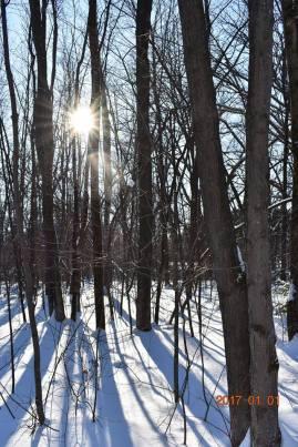 winter-trees